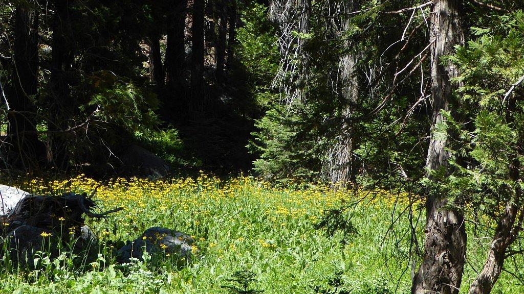 Sequoia-National-Park-037.JPG