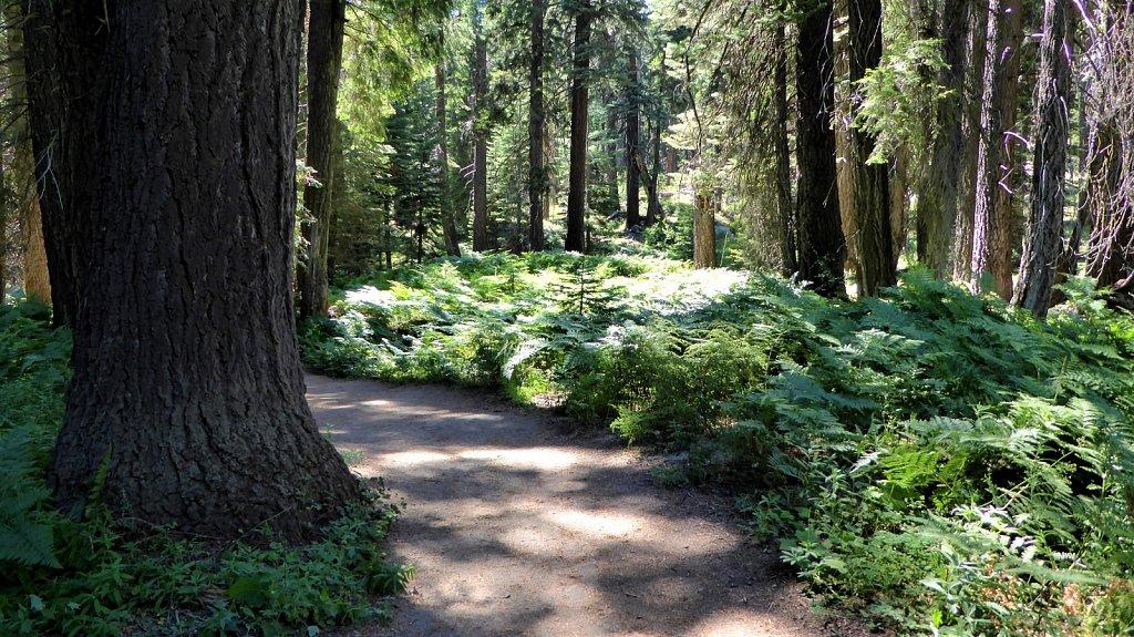 Sequoia-National-Park-057.JPG