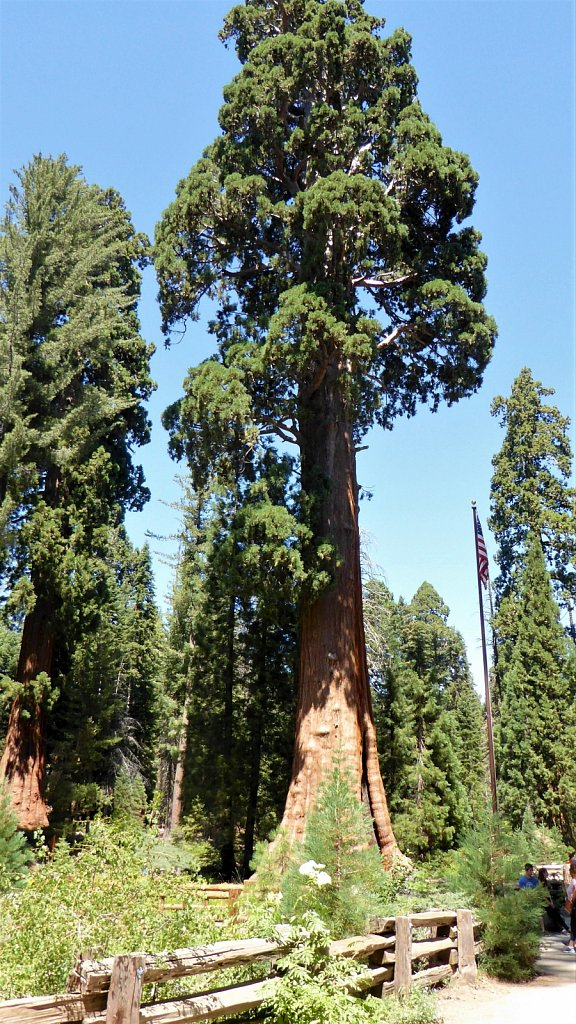 Sequoia-National-Park-063.JPG