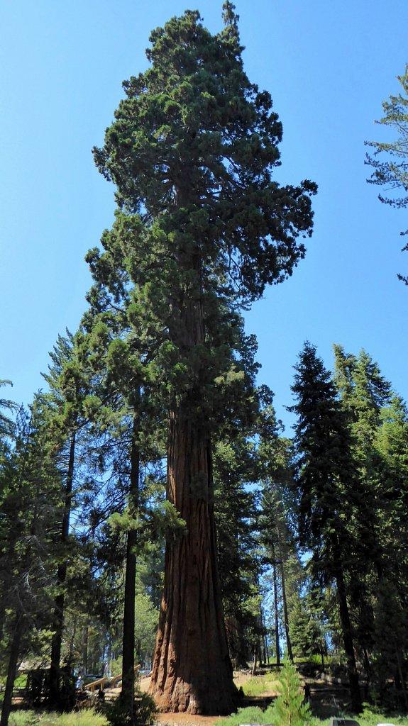 Sequoia-National-Park-068.JPG