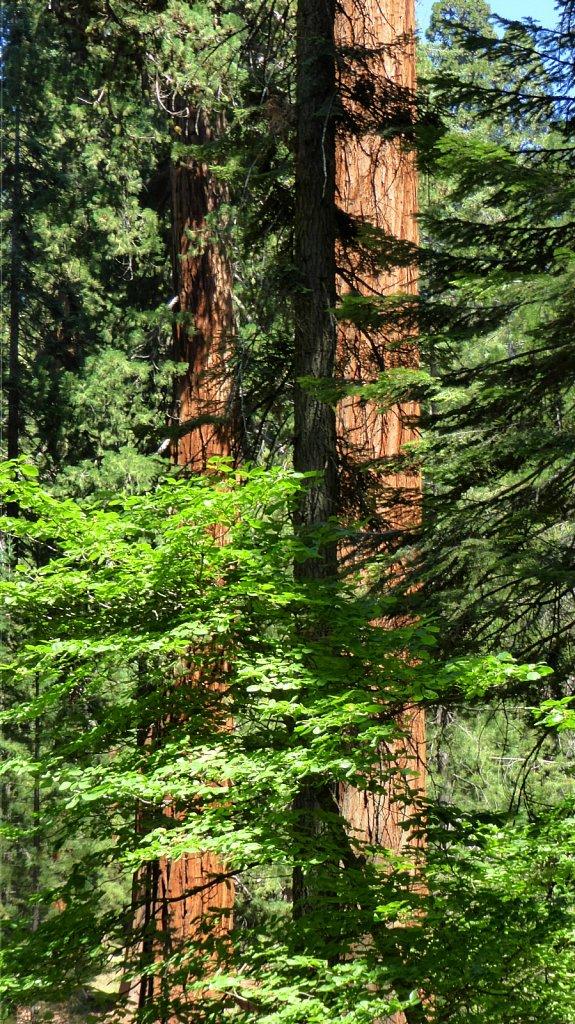 Sequoia-National-Park-073.JPG
