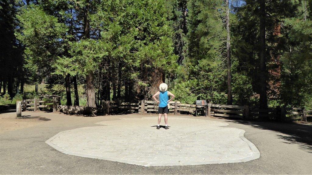 Sequoia-National-Park-078.JPG