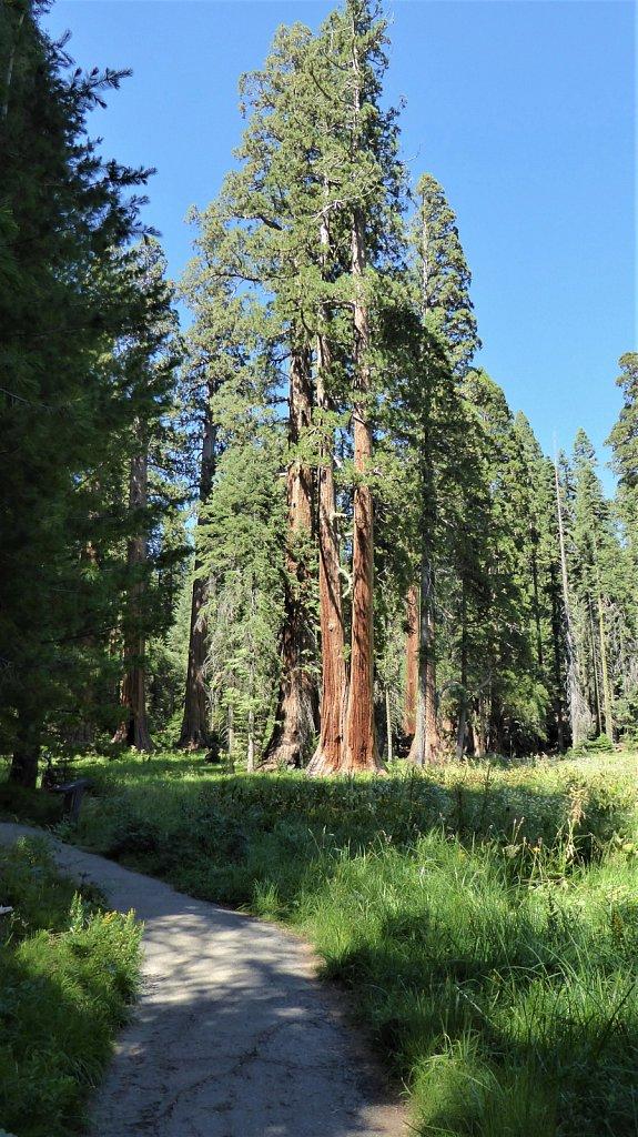 Sequoia-National-Park-084.JPG
